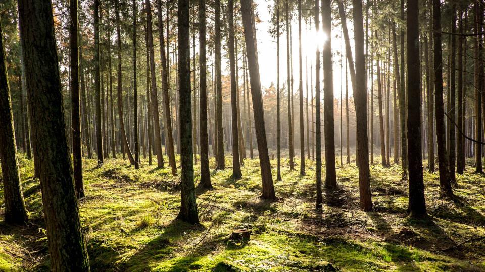 Den Wald vor lauter Bäumen....
